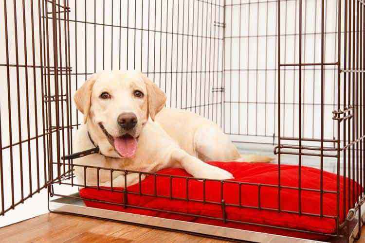 How To Soundproof A Dog Crate And Stop Dog Barking In Kennels A