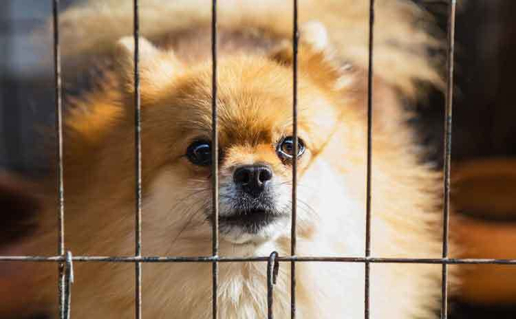 How To Soundproof A Dog Crate And Stop Dog Barking In