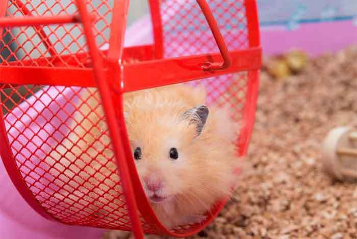 hamster wheel too noisy