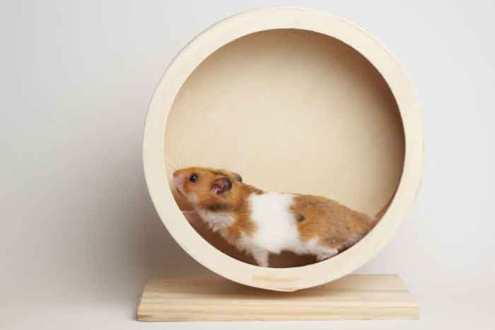 How To Make A Hamster Wheel Quiet A Quiet Refuge