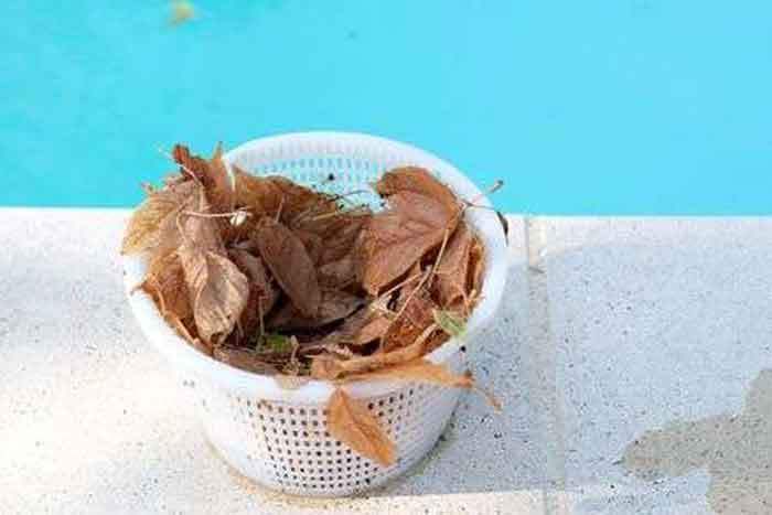 Clean the Skimmer Basket Regularly